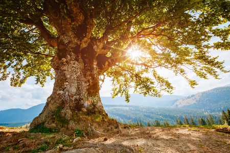 Bright rolling countryside around a farm. Sun glowing through tree. Picturesque day and gorgeous scene. Location place Carpathian, Ukraine, Europe. Concept ecology protection. The world's beauty. Imagens