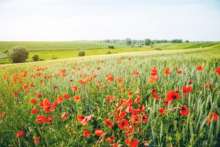 Impresionante escena del campo. Día fantástico y hermoso. Lugar rural de la ubicación de Ucrania, Europa. Maravillosa imagen de papel tapiz. Concepto de ecología: cambio climático en el medio ambiente. Mundo de la belleza. Foto de archivo