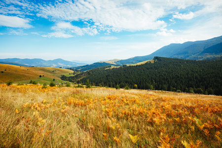 Bright hills and picturesque scene of the alpine valley. Location place Carpathian, Ukraine, Europe. Wonderful summertime wallpaper. Sunny day on outdoor. Explore the worlds beauty and wildlife.