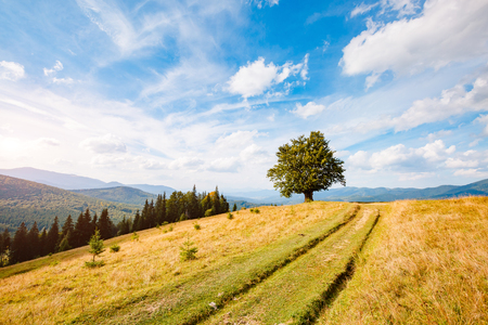 Bright rolling countryside around a farm in the morning light. Picturesque day and gorgeous scene. Location place Carpathian, Ukraine, Europe. Concept ecology protection. Explore the worlds beauty.