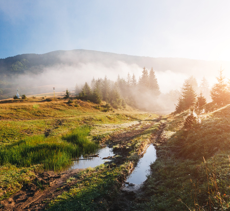 Scenic image of misty valley in the sunlight. Locations Carpathian national park Ukraine, Europe. Perfect wallpapers. Explore the environment. Discover the beauty of earth. Great picture of wild area