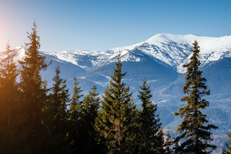 Scenic image of snowy peaks in the sunlight. Location Carpathian national park Ukraine, Europe. Perfect wallpapers. Explore the environment. Discover the beauty of earth. Great picture of wild area.