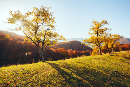 Stunning image of the bright trees in sunny beams. Gorgeous day and vivid scene. Red and yellow leaves. Location place Carpathians, Ukraine, Europe. Warm tone. Explore the world's beauty.
