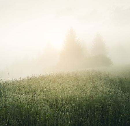 Scenic image of misty pasture in the sunlight. Locations Carpathian national park Ukraine, Europe. Perfect wallpapers. Discover the beauty of earth.