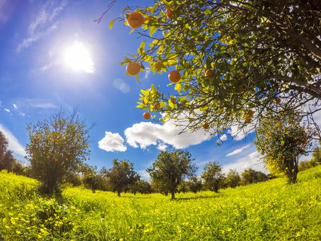Fantastic views of the garden with blue sky. Mediterranean climate. Sicily island, Italy, Europe. Beauty world. Stock Photo