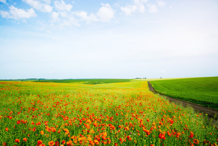 Awesome scene of the countryside. Fantastic and gorgeous day. Location rural place of Ukraine, Europe. Wonderful image of wallpaper. Ecology concept - climate change in the environment. Beauty world. Reklamní fotografie