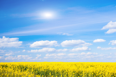 Great canola field in sunlight. Gorgeous day and picturesque scene. Location rural place of Ukraine, Europe. Wonderful image of wallpaper. Ecology concept, global warming. Explore the worlds beauty. Stock Photo