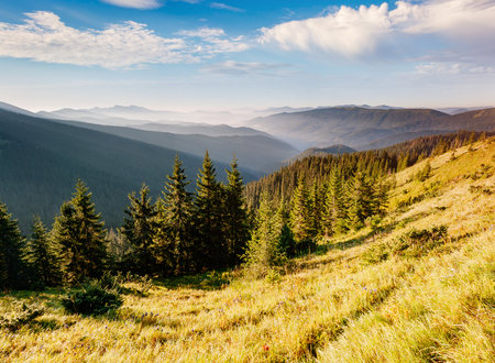 Bright hills and picturesque scene of the alpine valley. Location place Carpathian, Ukraine, Europe. Wonderful summertime wallpaper. Sunny day on outdoor . Explore the world's beauty and wildlife. Stok Fotoğraf