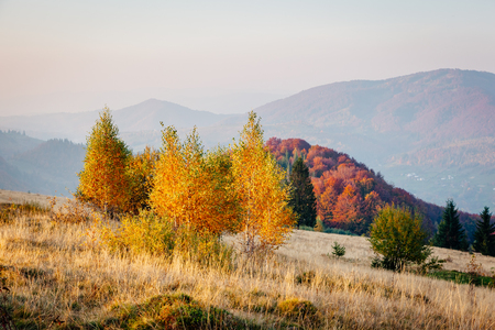 Majestic image of birches in sunny beams at magical valley. Gorgeous and picturesque morning scene. Red and yellow leaves. Location place Carpathians, Sheshory resort, Ukraine, Europe. Beauty world. Banco de Imagens