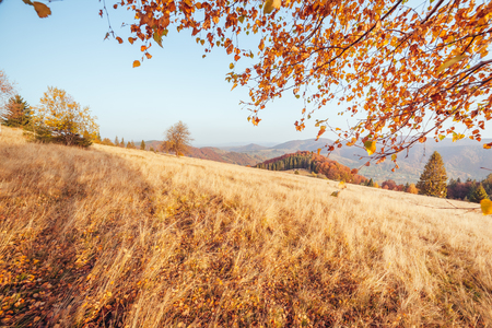 Majestic image of birches in sunny beams at magical valley. Gorgeous and picturesque morning scene. Red and yellow leaves. Location place Carpathians, Sheshory resort, Ukraine, Europe. Beauty world. Stockfoto