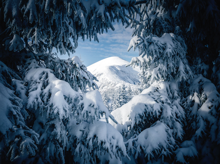 Scenic image of frozen fir trees. Frosty day on ski resort. Location Carpathian, Ukraine Europe. Great picture of wild area. Explore the beauty of earth. Lifestyle hiking concept. Happy New Year! Standard-Bild