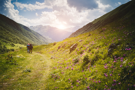 Alpine meadows in sunshine. Location Upper Svaneti, Georgia country, Europe. Main Caucasian ridge. Scenic image of wild area. Discover the beauty of earth. Hiking concept, adventure vacation.