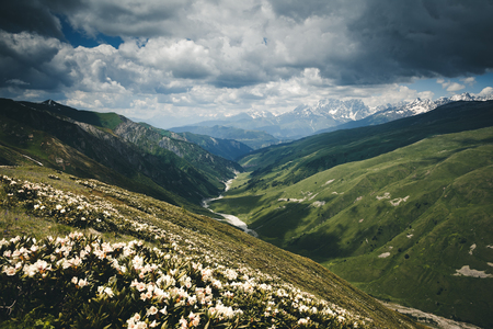Alpine meadows with rhododendron flowers. Location Svaneti, Georgia country, Europe. Main Caucasian ridge. Scenic image of wild area. Discover the beauty of earth. Excellent wallpapers. Moody picture Banco de Imagens
