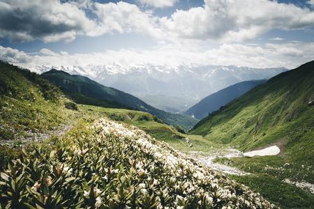 Alpages aux fleurs de rhododendrons au pied d'Ushba. Emplacement Upper Svaneti, pays de Géorgie, Europe. crête du Caucase. Image panoramique du concept de randonnée lifestyle. Explorez la beauté de la terre. Banque d'images