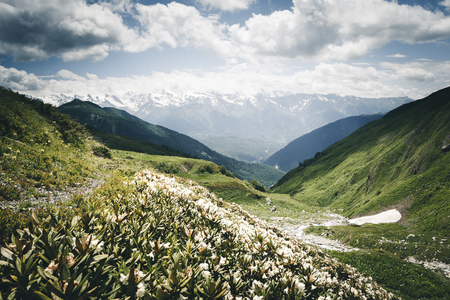 Alpine meadows with rhododendron flowers at the foot of Ushba. Location Upper Svaneti, Georgia country, Europe. Caucasian ridge. Scenic image of lifestyle hiking concept. Explore the beauty of earth.