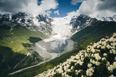 Alpine meadows with rhododendron flowers. Location Svaneti, Georgia country, Europe. Main Caucasian ridge. Scenic image of wild area. Discover the beauty of earth. Excellent wallpapers. Moody picture 版權商用圖片