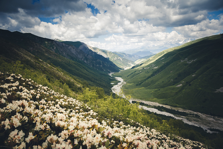 Alpine meadows with rhododendron flowers. Location Svaneti, Georgia country, Europe. Main Caucasian ridge. Scenic image of wild area. Discover the beauty of earth. Excellent wallpapers. Moody picture Zdjęcie Seryjne