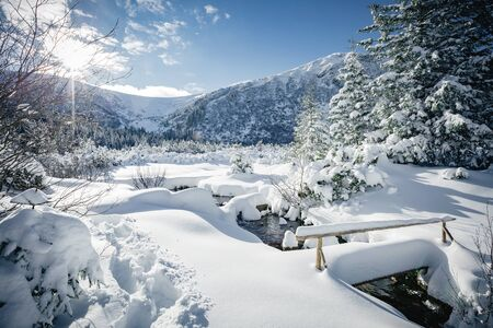 Scenic image of spruces tree. Frosty day, wintry weather. Location Carpathian, Ukraine Europe. Ski resort. Great picture of wild area. Explore the beauty of earth. Fabulous wallpapers. Happy New Year Stock Photo