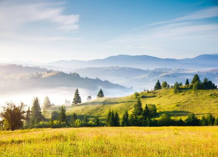 Misty alpine highlands in sunny day. Location Carpathian national park, Ukraine, Europe. Picture of wild area. Scenic image of hiking concept. Adventure vacation. Explore the beauty of earth. Archivio Fotografico