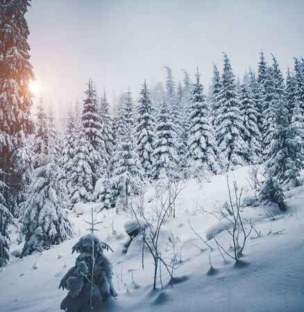 Scenic image of fairy-tale woodland. Frosty day. Location Carpathian national park, Ukraine, Europe. Picture of wilderness area. Perfect wallpapers of tourism vacation. Discover the beauty of earth.