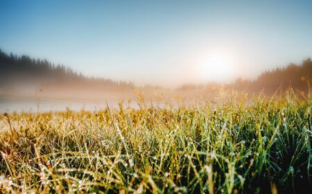 Splendid meadow in the morning light. Locations place Durmitor National park, village Zabljak, Montenegro, Balkans, Europe. Scenic image of the bright alpine valley. Discover the beauty of earth.