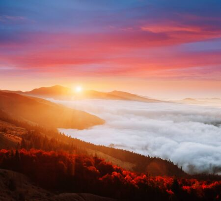 Incredible morning moment in alpine foggy valley. Location Carpathian mountain, Ukraine, Europe. Drone photography. Scenic image of wilderness. Attractive wallpaper. Discover the beauty of earth.