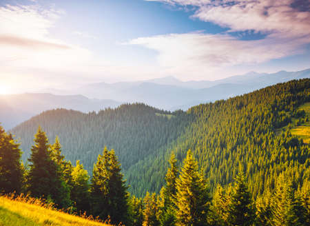 Attractive view of green mountains in summer sunny day. Location place of Carpathian national park, Ukraine, Europe. Wild protected area. Incredible natural wallpaper. Discover the beauty of earth. Banco de Imagens