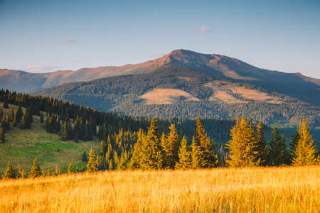 Peaceful view of mountain landscape with fir forest on a sunny day. Location place of Carpathian national park, Ukraine, Europe. Wild protected area. Natural wallpaper. Discover the beauty of earth.