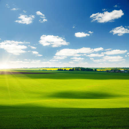 Vivid green grass on the spring field and fluffy white clouds on a sunny day. Location place of Ukrainian agrarian region, Europe. Photo of ecology concept. Perfect wallpapers. Beauty of earth. Banco de Imagens