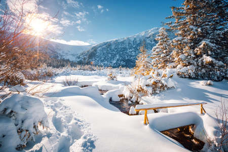 Fantastic winter landscape with spruces covered in snow. Frosty day, exotic wintry scene. Location place Carpathian mountains, Ukraine, Europe. Winter nature wallpapers. Happy New Year! Beauty world. Standard-Bild - 158183469