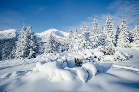 Attractive image of white spruces on a frosty day. Location place Carpathian ski resort, Ukraine, Europe. Exotic wintry scene. Christmas winter wallpaper. Happy New Year! Discover the beauty of earth. Standard-Bild - 158641343