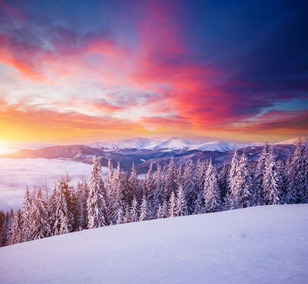 Morning frosty landscape and snowy coniferous forest. Location place Carpathian ski resort, Ukraine, Europe. Exotic wintry scene. Great winter wallpaper. Happy New Year! Discover the beauty of earth. Standard-Bild - 158641059
