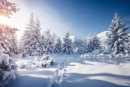 Frosty day in snowy coniferous forest. Location place of Carpathian ski resort, Ukraine, Europe. Incredible wintry wallpapers. Christmas holiday concept. Happy New Year! Discover the beauty of earth. Standard-Bild - 158641450