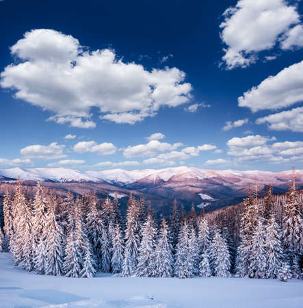 Frosty day in snowy coniferous forest. Location place of Carpathian ski resort, Ukraine, Europe. Incredible wintry wallpapers. Christmas holiday concept. Happy New Year! Discover the beauty of earth. Standard-Bild - 158641484