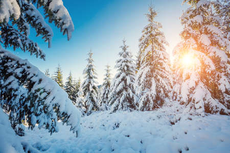 Frosty day in snowy coniferous forest. Location place of Carpathian ski resort, Ukraine, Europe. Incredible wintry wallpapers. Christmas holiday concept. Happy New Year! Discover the beauty of earth. Standard-Bild - 158640808
