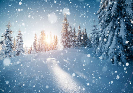 Brilliance snowflakes in snowy coniferous forest. Location place of Carpathian mountains, Ukraine, Europe. Captivating wintry wallpapers. Christmas holiday concept. Happy New Year! Beauty of earth. Standard-Bild - 158641251
