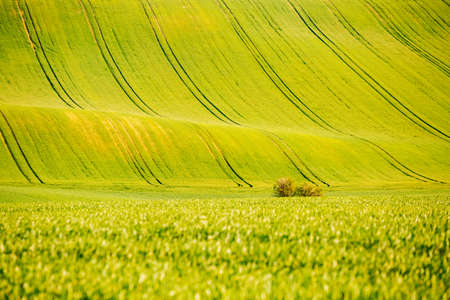 Splendid view on of sunlit wavy fields of agricultural area. Location place of South Moravian region (Moravia), Czech Republic, Europe. Minimalistic landscape of agrarian industry. Beauty of earth.