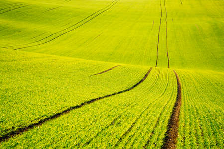 Attractive wavy fields in agricultural area on a sunny day. Location place of South Moravian region (Moravia), Czech Republic, Europe. Nature wallpaper. Agrarian land in springtime. Beauty of earth.