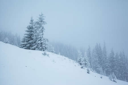 Frozen white spruces on a frosty day. Location Carpathian mountain, Ukraine, Europe. Alpine ski resort. Exotic wintry scene. Incredible winter wallpaper. Happy New Year! Explore the beauty of world.