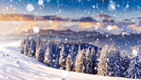 Charming white spruces on a frosty day. Creative collage. Winter alpine ski resort. Exotic wintry scene. Fabulous seasonal wallpapers. Happy New Year! Discover the beauty of earth.