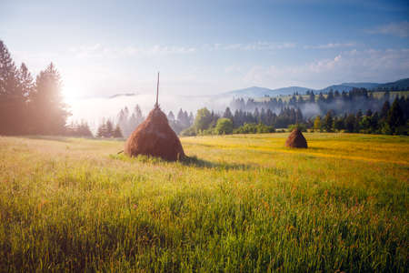 Exotic alpine highlands in sunny day. Location Carpathian mountains, Ukraine, Europe. Picture of a rustic area. Scenic image of hiking concept. Summer holiday season. Explore the beauty of earth.