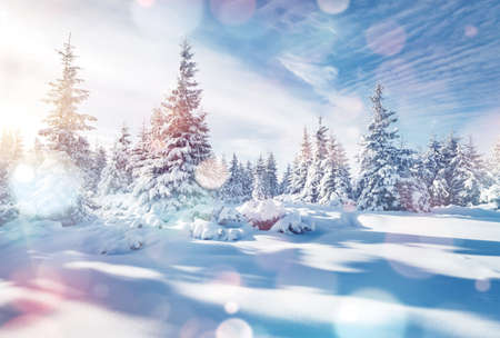 Charming winter landscape in the morning. Location Carpathian, Ukraine, Europe. Bokeh light effect.  toning filter. Ski resort. Exotic wintry scene. Fabulous winter wallpaper. Happy New Year!