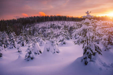 Dreamy view of the fairy-tale woodland. Location Carpathian mountain, Ukraine, Europe. Magical wintry scene on a frosty day. Alpine ski resort. Perfect winter wallpapers. Discover the beauty of earth.