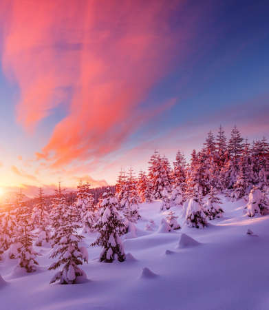 Dreamy view of the fairy-tale woodland. Location Carpathian mountain, Ukraine, Europe. Magical wintry scene. Alpine ski resort. Perfect winter wallpapers. Happy New Year! Discover the beauty of earth.