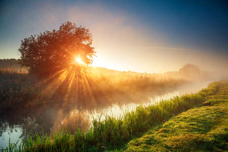 Fantastic foggy river with fresh green grass in the sunlight. Sun beams through tree. Location place Seret river, Ternopil. Ukraine, Europe. Wonderful summer wallpaper. Discover the world of beauty. Standard-Bild