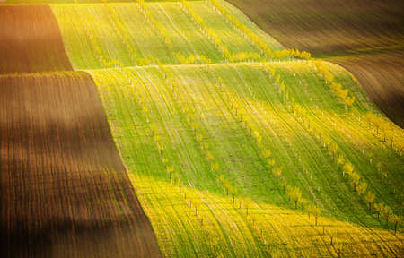 Idyllic sunlight on the wavy fields of agricultural area. Location place of South Moravia region, Czech Republic, Europe. Minimalistic landscape of agrarian industry. Discover the beauty of world.
