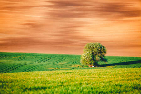 Perfect sunlight on the wavy fields of agricultural area. Location place of South Moravia region, Czech Republic, Europe. Minimalistic landscape of agrarian industry. Discover the beauty of world.