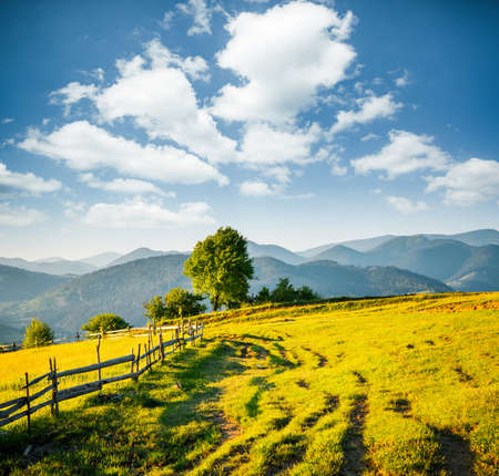 Beautiful sunny day in picturesque mountain landscape. Location place of Carpathian mountains, Ukraine, Europe. Image of attractive summer scene, nature wallpapers. Discover the beauty of earth.