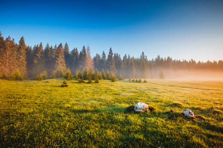 Misty morning pasture in the sunlight. Locations place Durmitor National park, village Zabljak, Montenegro, Balkans, Europe. Attractive picture of a countryside. Discover the beauty of earth. 스톡 콘텐츠
