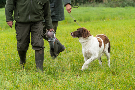 Dutch partridge dog, Drentse patrijs hond, walking on a leash with two hunters holding a pigeon in a field Stockfoto